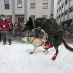 The dogs of musher Smyth await for the ceremonial start to the Iditarod dog sled race in downtown Anchorage, Alaska