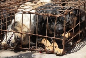 Salvataggio-cani-Cina