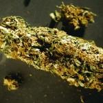 20121106-marijuana-x600-1352265505