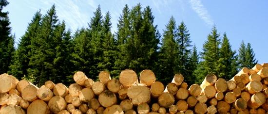waldundholzlang(1)