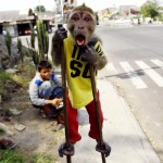 Street Monkey Performance in Solo