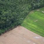 deforestazione-amazzonia