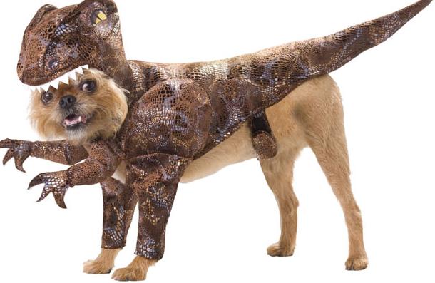 Costume-per-cane